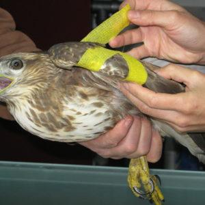 http://www.veterinariaanimaliesotici.it/wp-content/uploads/2011/11/IMG_4099-300x300.jpg