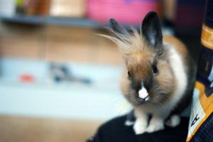http://www.veterinariaanimaliesotici.it/wp-content/uploads/2012/08/4935103020_53da64ec74_b-300x200.jpg