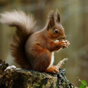 http://www.veterinariaanimaliesotici.it/wp-content/uploads/2016/11/scoiattolo-300x300.jpg