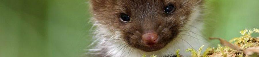 http://www.veterinariaanimaliesotici.it/wp-content/uploads/2017/04/197596dec48e33cf65857c0dead38441-forest-animals-wild-animals-900x200.jpg