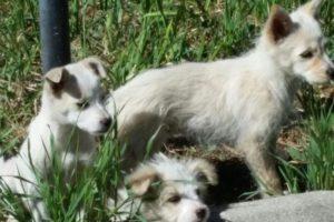 http://www.veterinariaanimaliesotici.it/wp-content/uploads/2017/06/IMG-20170424-WA0012-e1497280890450-300x200.jpg